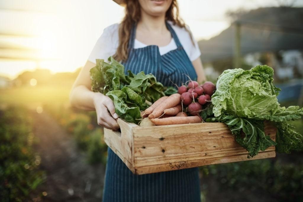 panier de légumes de producteur